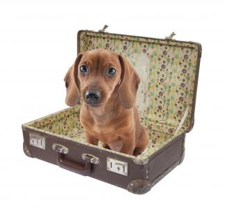 How to Book Lodging When Traveling With Your Pets